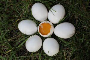 Cracking an egg can be good or bad depending on the circusmstances...not unlike cracking your back.