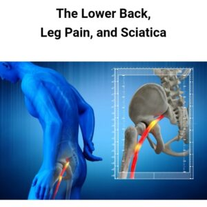 Picture shows the sciatic nerve exiting the lower back.